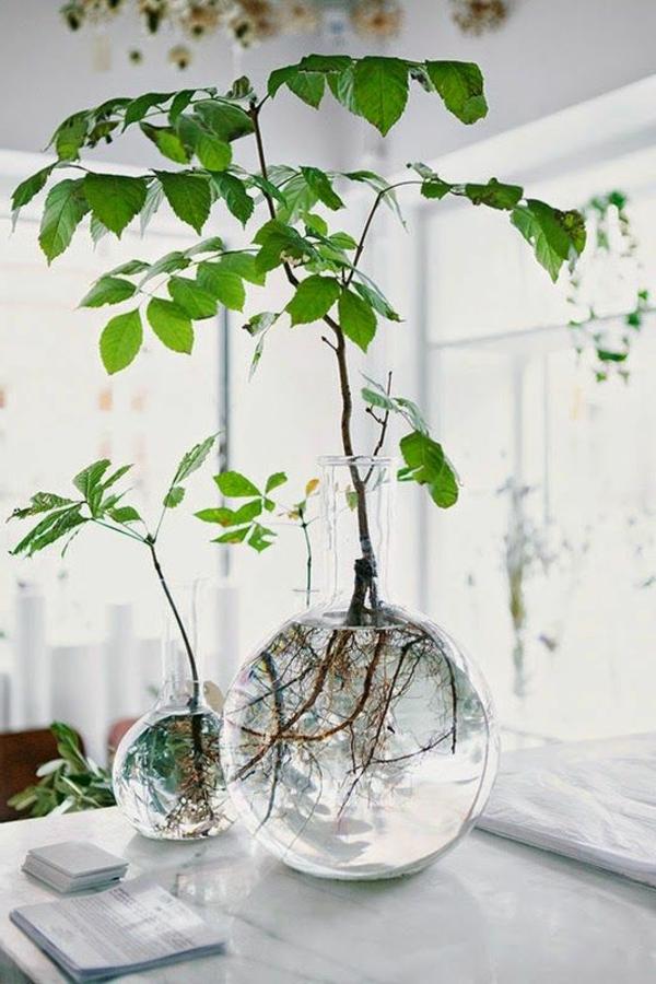 plante-verte-intérieur-déco-vase-cuisin-détail