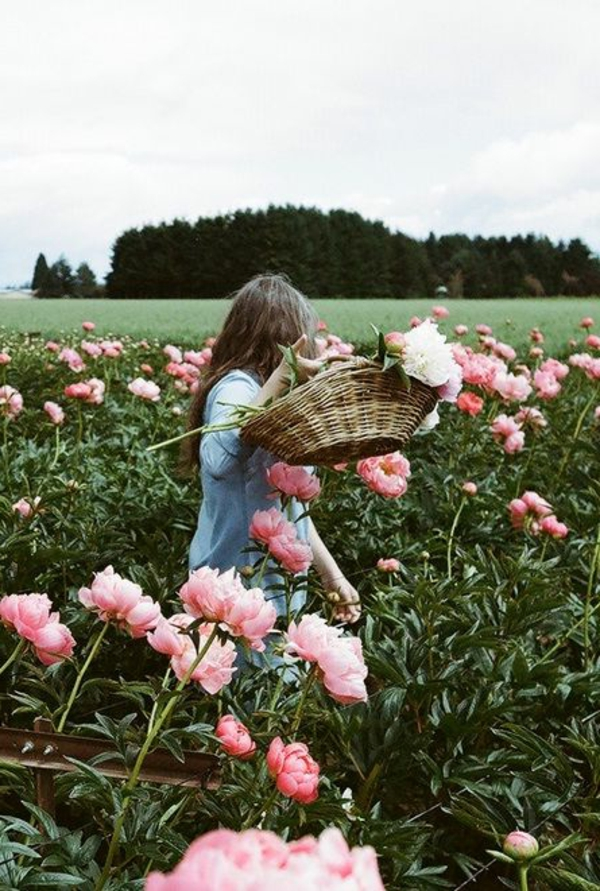 roses-ramasser