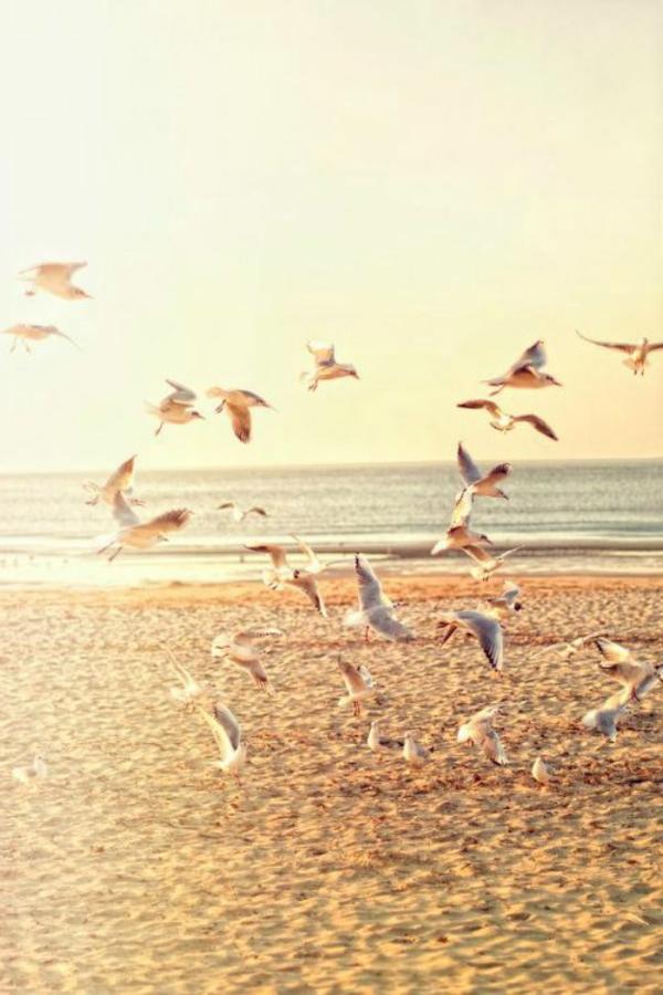 Couche-de-soleil-sur-la-mer-cote-sable-oiseaux-mer