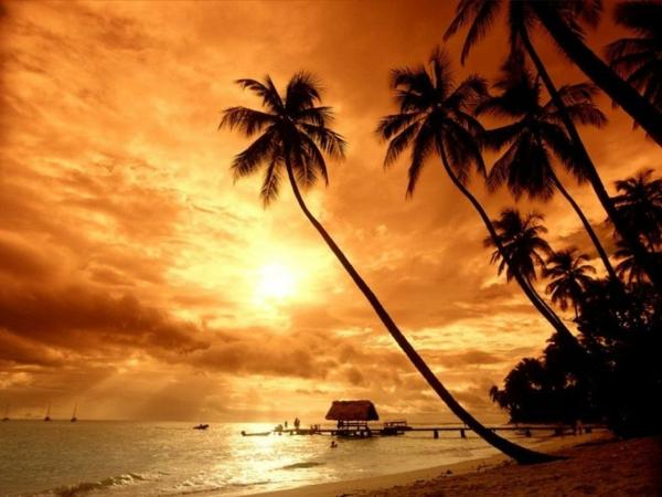 Couche-de-soleil-sur-la-mer-palmiers-