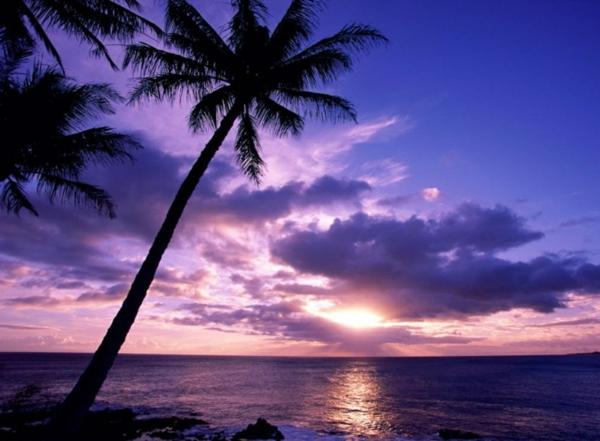 Couche-de-soleil-sur-la-mer-violet-palmier