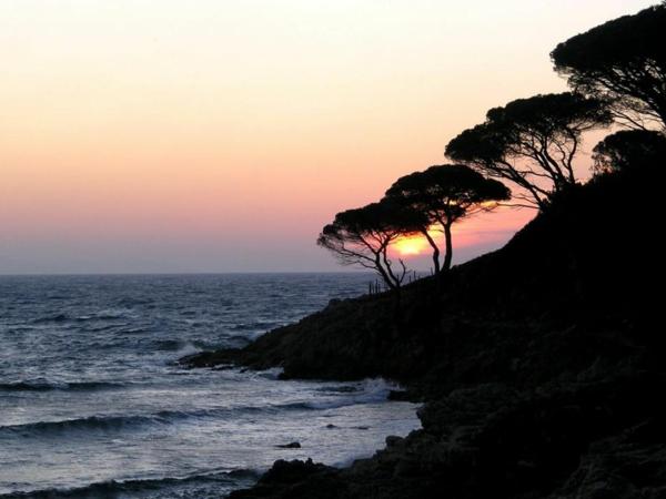 Coucher-de-soleil-sur-la-mer-arbres-plage