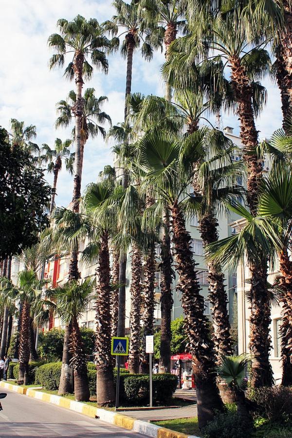 Haute-temperature-Antalya-Turquie-beau-temps-palmiers