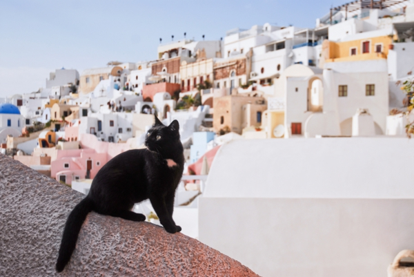 Santorini_Cat._Background-_view_on_Firostefani._Santorini_island_(Thira),_Greece-resized