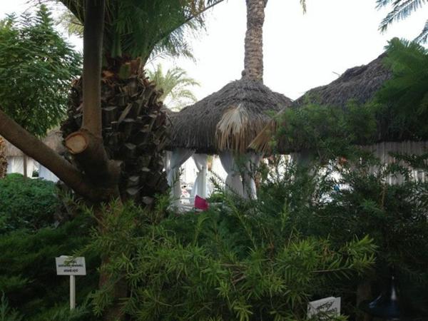 Visite-antalya-palmiers-en-été-plage
