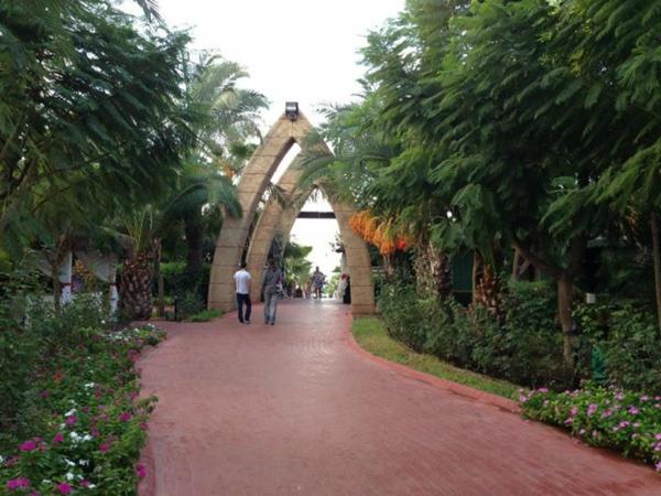 Visite-antalya-printemps-été-automne-palmiers