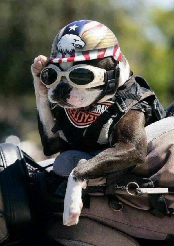 casque-de-moto-intégral,-casque-modulable-casque-jet-casque-crossover-chien-resized