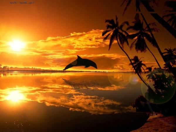 destination-couche-de-soleil-au-bord-de-la-mer-dauphine