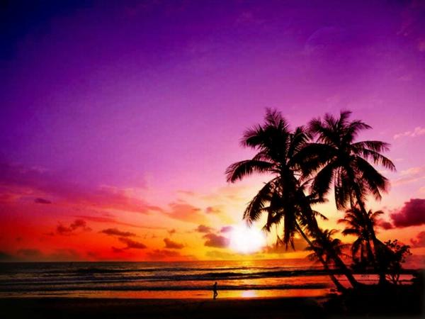 destinations-les-plus-belles-du-Monde-palmier