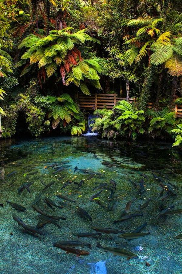 fontaine-pour-bassin-bassin-un-lac-miraculeux-avec-petite-cascade