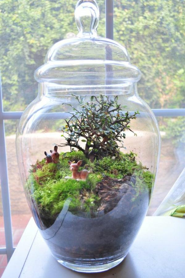idée-déco-terrarium-plantes-vertes