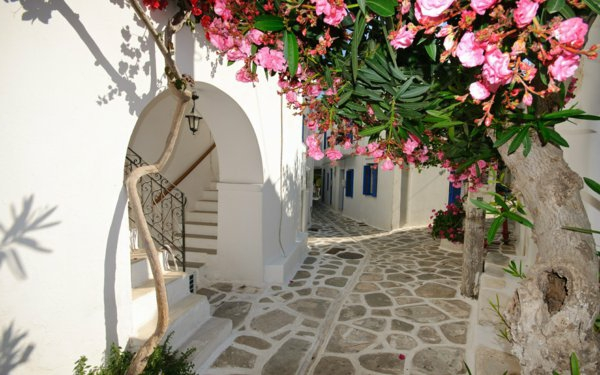 les-arbres-fleuries-à-Santorini-Ile-de-Santorin-paysage-joli