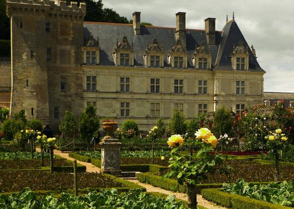 les-châteaux-de-la-Loire-roses-magnifiques