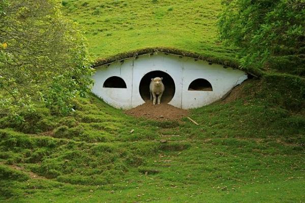 maison-de-hobbit-et-un-visiteur-sympathique