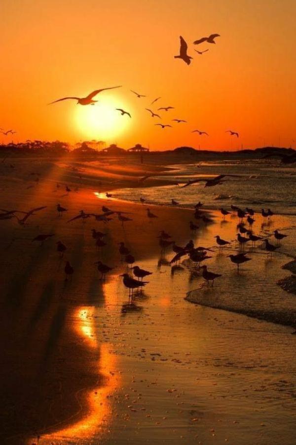 oiseaux-au-couche-du-soleil-jolie-photo