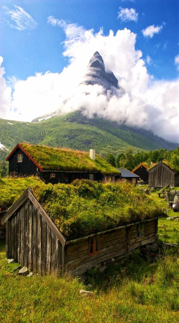 toit-végétal-en-harmonie-avec-la-nature