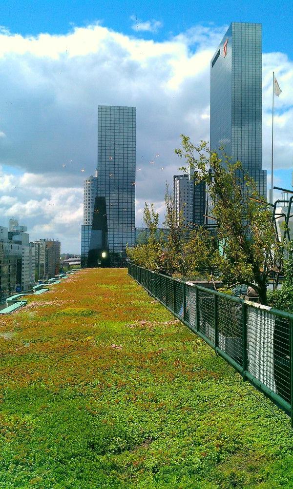 Le toit v g tal en 77 photos - Immeuble vegetal ...