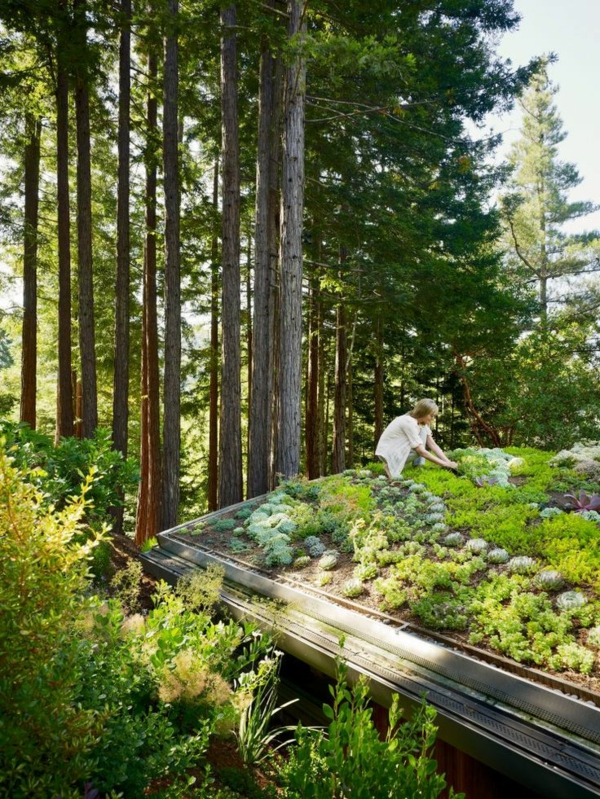 toit-végétal-jardins-et-potages-sur-toit