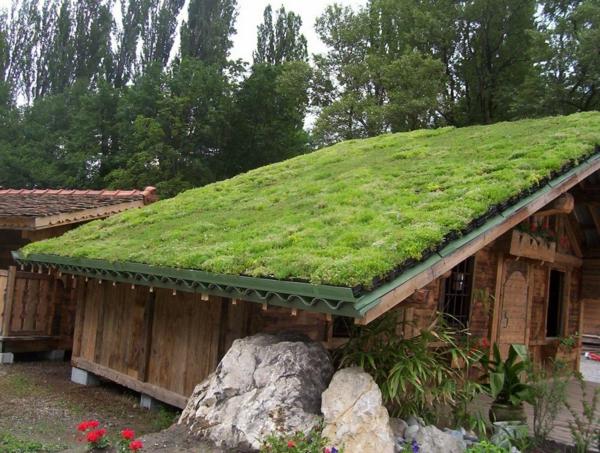 toit-végétal-petite-cabane-végétalisée