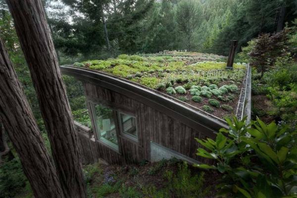 toit-végétal-sur-une-maison-dans-la-forêt
