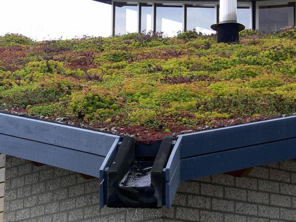 toit-végétal-toits-écologiques