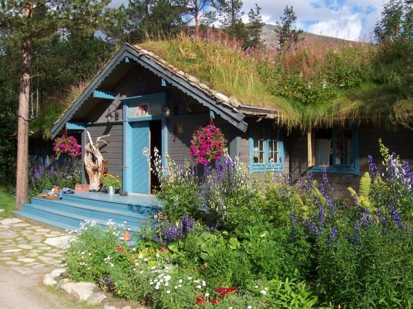 toit-végétal-une-petite-maison-bleue
