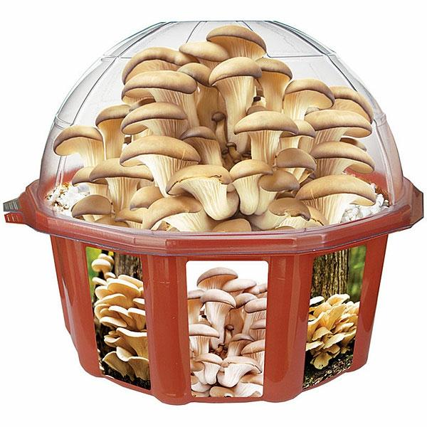 Grow-Your-Own-Mushroom-Dome-Le-cadeau-anniversaire-originale-geek