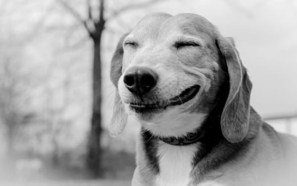 animaux-photographie-noir-et-blanc-sourire-chien-amusant