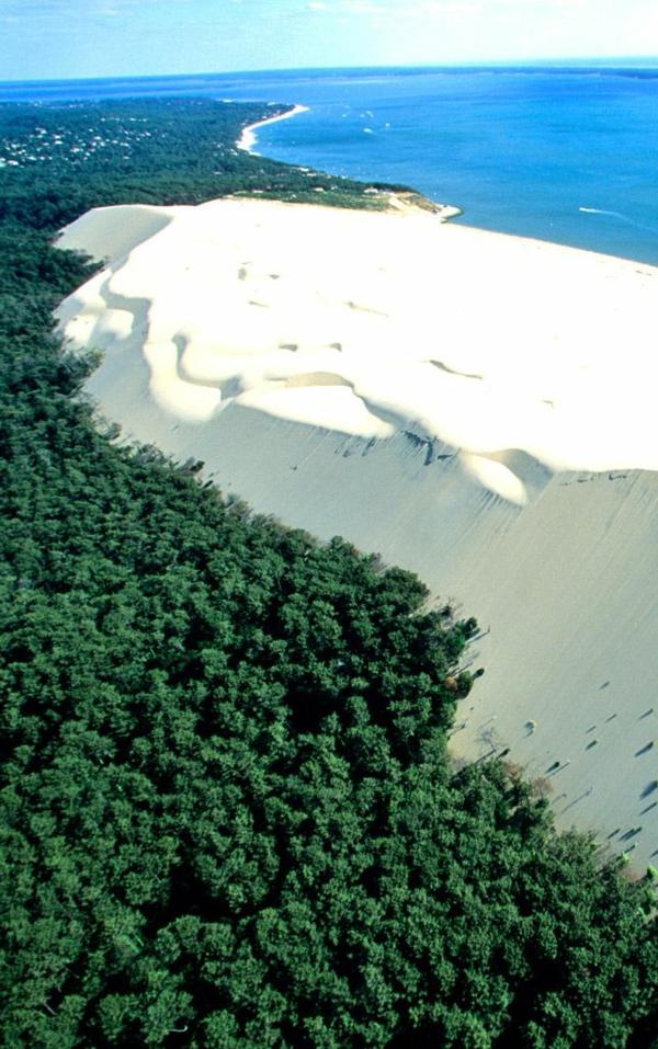 la-dune-du-pilat-la-falaise-du-côté-de-la-forêt