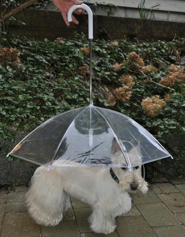parapluie-transparent-pour-chien