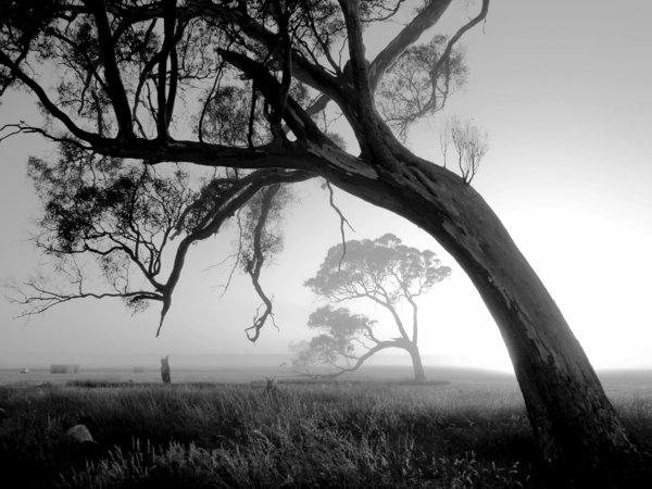 photo-la-nature-arbre-brouillard-noir-et-blanc-photographie-artistique