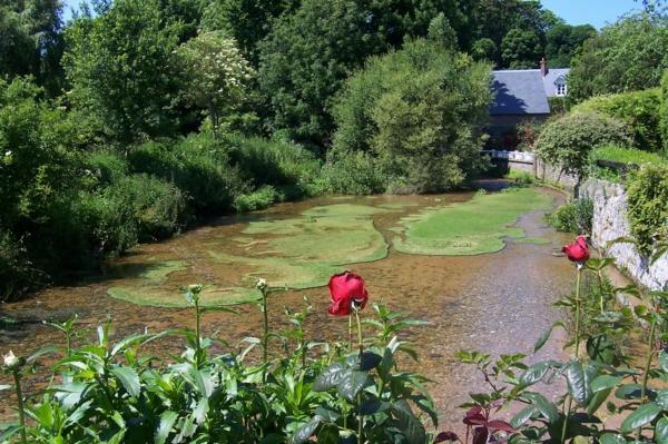 veules-maison-fleurs-fleuve-ville-vert-les-roses