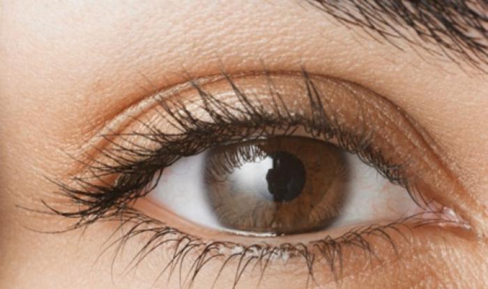 Béauté-maquillage-yeux-marrons-oeil