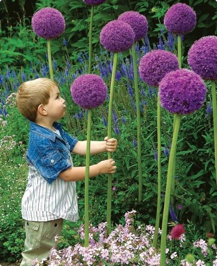 jardin-paysager-jolies-plantes-pour-le-jardin-paysagé