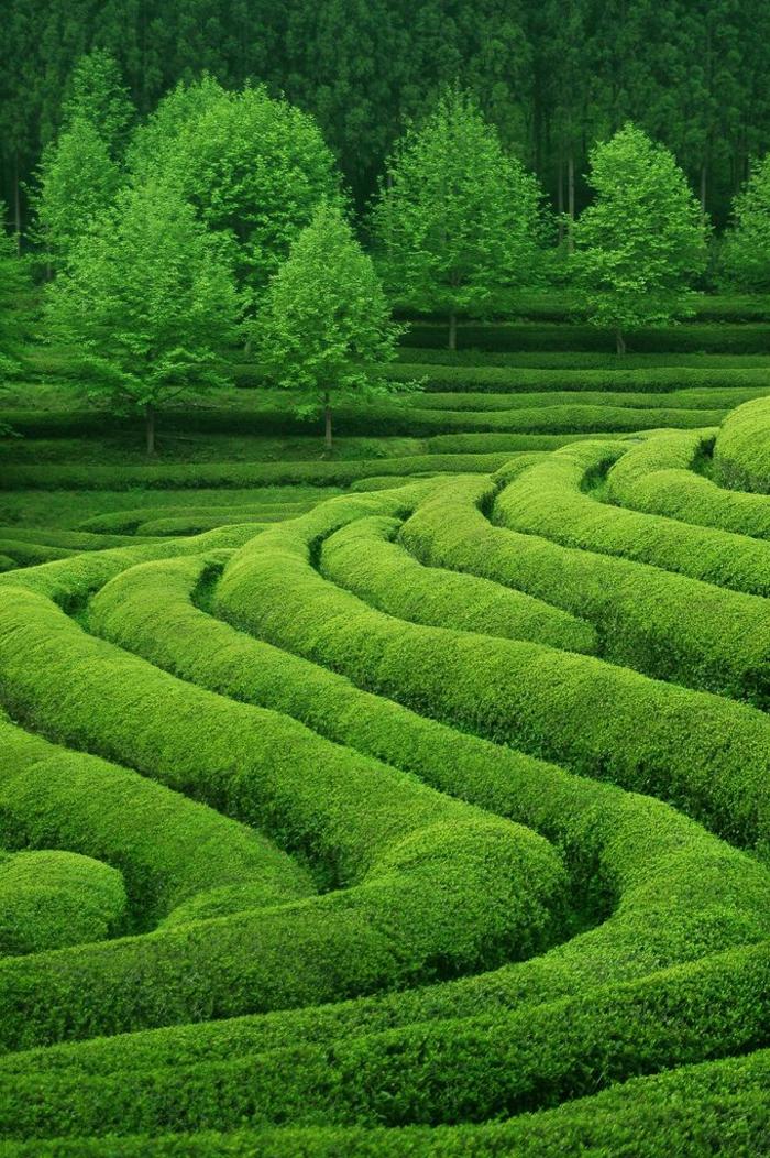 jardin-paysager-miraculeux