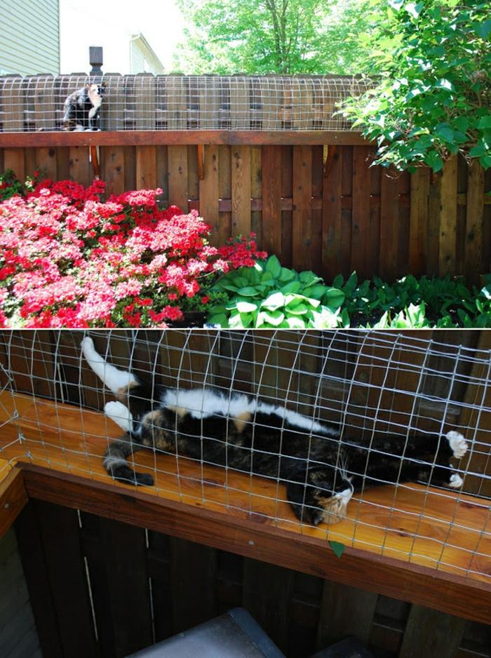 jardin-paysager-refuge-pourle-chat-domestique
