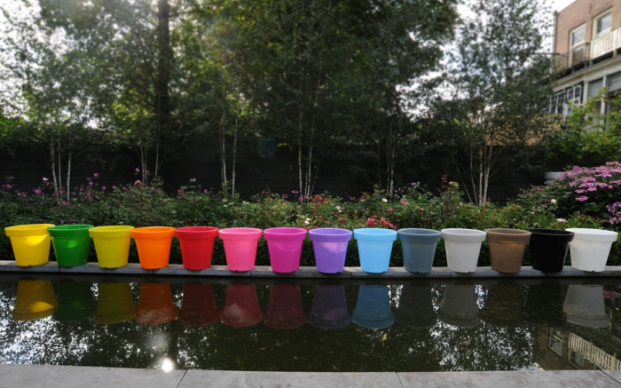 le-plant-vert-dans-un-pot-fleur-lumineux-couleur