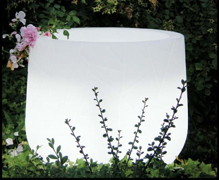 le-plant-vert-dans-un-pot-fleur-lumineux-jardin
