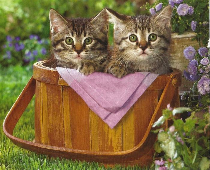 panier-pique-nique-jour-nature-petites-chats