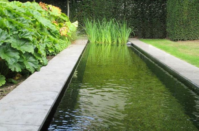 piscine-biologique-bassin-organique-rectangulaire