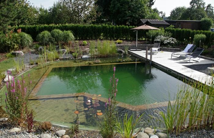 piscine-biologique-design-original