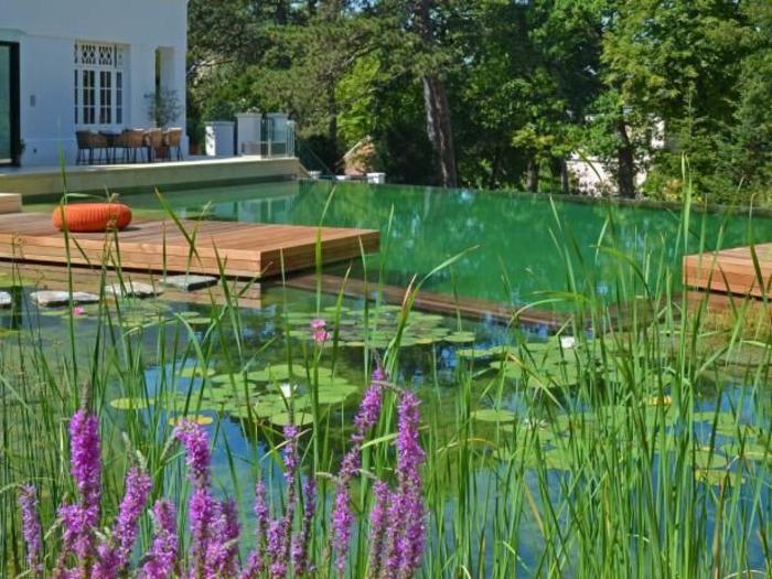 piscine-biologique-extérieur-contemporain-design-de-piscine-naturel