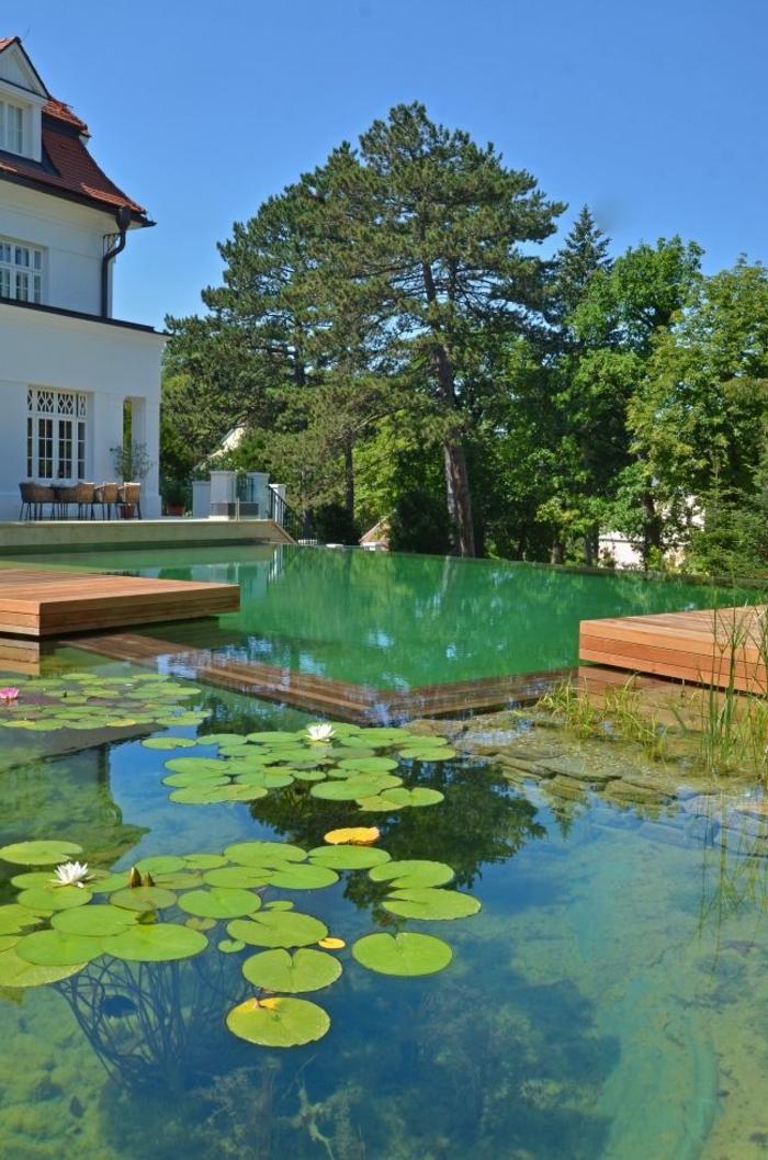 piscine-biologique-grand-bassin-biologique
