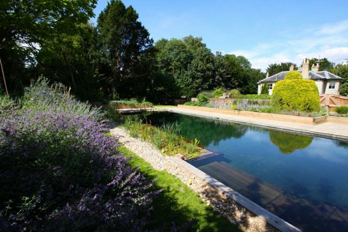piscine-biologique-l'eau-pure-des-piscines-vivantes