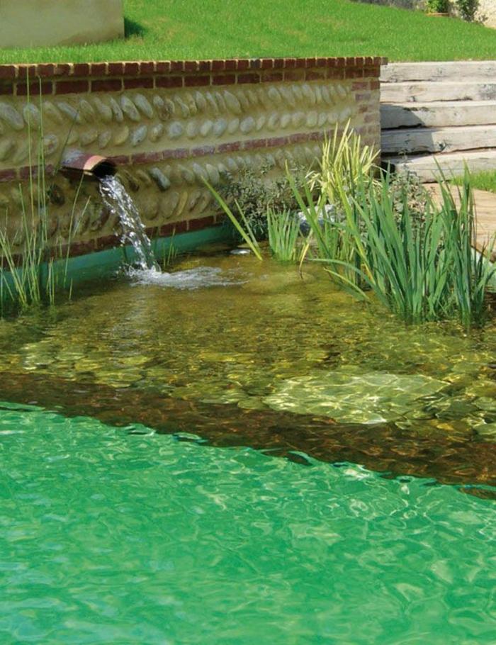 piscine-biologique-les-eaux-limpides-d'une-piscine-organique