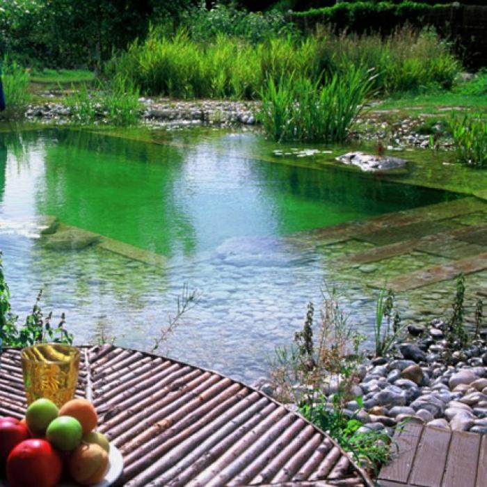 piscine-biologique-piscines-organiques-jolies
