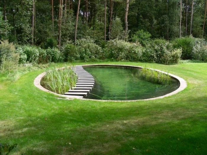 piscine-biologique-petit-bassin-biologique