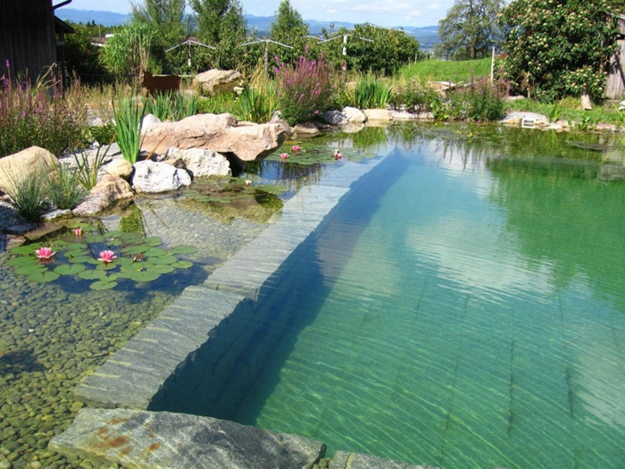 La piscine biologique une solution co friendly pour for Piscine pour jardin