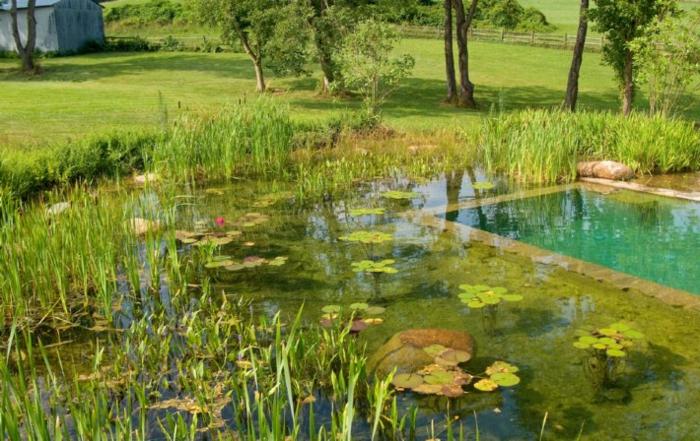 piscine-biologique-pour-votre-jardin-aquatique