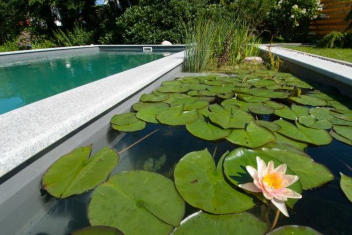 piscine-biologique-supmer-esthétique